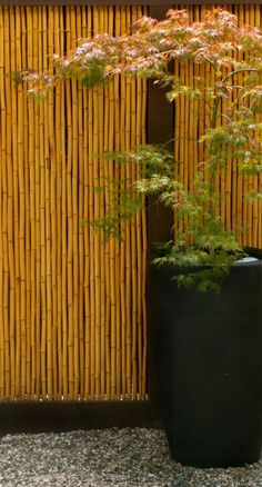 This is a great idea for creating privacy in a garden area.  My parents have tons of bamboo... I wonder what we could create... Bamboo Privacy Fence, Bamboo Garden Fences, Privacy Fence Designs, Asian Landscape, Garden Landscape Design, Garden Landscaping, Japanese Garden Design, Potted Trees, Side Garden