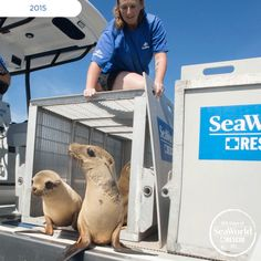 Time, energy and passion are what the SeaWorld rescue team gives to save malnourished sea lions. Without SeaWorld, these pups would have never received a second chance at life. #365DaysOfRescue