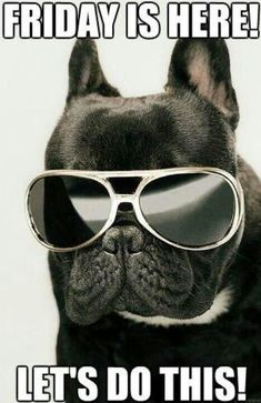 Friday Is Here quotes cute quote friday days of the week friday quotes french bulldog