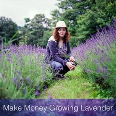 Lavender can be one of the most profitable cash crops for small growers. Even a small backyard lavender garden can produce a surprising amount of income.   #Growing Lavender #Lavender Crafts