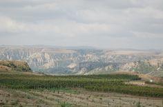 #Savalan #vineyard