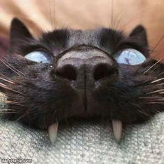 Nice Yarrrrrrrr Cat