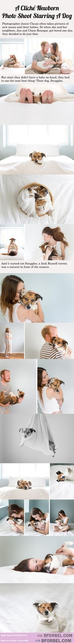 Are you a dog person? These '20 cliche new born photos starring a dog' have got us going! #newdog #adorable