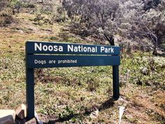 Hints and tips for Noosa, sunshine coast! Australia