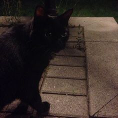 Found Cat - Unknown - Markham, ON, Canada L3T 1B7 on September 03, 2015 (13:00 PM)