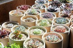 多肉植物 旅行风景 花卉 盆栽 植物 多肉植物。