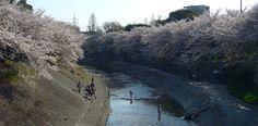 Yamazaki river. Nagoya