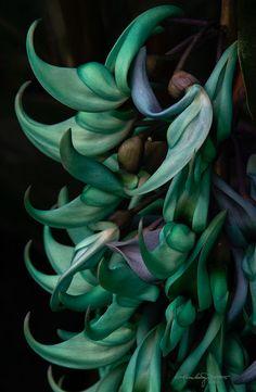 Exotic Jade Vine