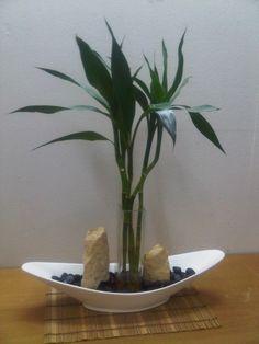 Lucky Bamboo Arrangements on White Ceramic vase. by WallzArt Water Plants Indoor, Bamboo Plants, Aquatic Plants, Orchids Garden, Bamboo Bathroom, Lucky Bamboo, Ceramic Vase, Wabi Sabi, Planting Succulents