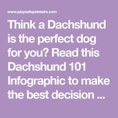 Think a Dachshund is the perfect dog for you? Read this Dachshund 101 Infographic to make the best decision on your next dog!