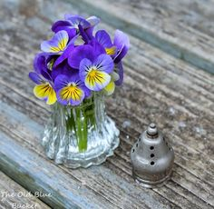 A vintage salt shaker filled with my sweet violas Those little Dollar Store voltive candle holders work tool. Flower Planters, Cactus Flower, My Flower, Flower Vases, Flower Bouquets, Cut Flowers, Fresh Flowers, Purple Flowers, Beautiful Flowers