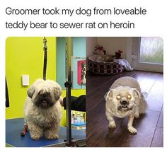 Animal Pictures Memes to Make You Laugh - 12