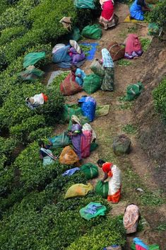 Kerala, India - aah, to visit the tea plantations there!