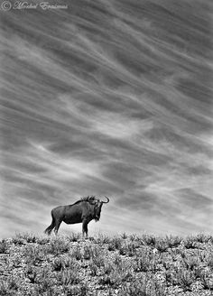 Nature in black and white - by Morkel Erasmus