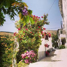 Rincón de Trevélez Sidewalk, Plants, Viajes, Side Walkway, Walkway, Plant, Walkways, Planets, Pavement