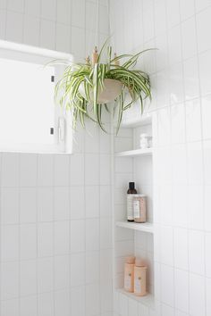 i loooove a little pop of greenery in a bathroom, as soon as the renovation was done i realized what a huge visual difference a plant in the corner would make when you walk by. i looked online for … Bathroom Plants, Bathroom Renos, Bathrooms With Plants, Skylight Bathroom, White Subway Tile Bathroom, Subway Tile Showers, White Tiles, Bad Inspiration, Bathroom Inspiration