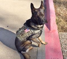 ForceK9 | ForceK9 Photos - This is Our K9 Pack | Home of the K9 MOLLE vest
