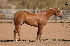 How to Evaluate a Horse's Reining Potential