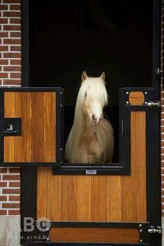 Fancy pony in a fancy stable!