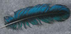 A single Tui feather  - Tui Elegance by Jo Bridge