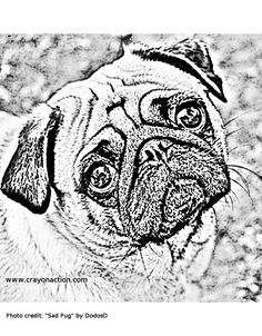 printable of pugs coloring pages for kids and for adults