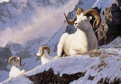 """White Gold"" -mansanarez Wildlife Art by Tom Mansanarez, limited edition prints featuring elk, deer, antelope, moose, cats, cougar, mountain lion, hounds, horses, and bobcats. - Limited Edition Prints"
