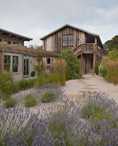Sunset Idea House, Monterey. Gravel with flagstone and lavander plants reduces…