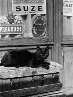 Nicolas Yantchevsky-chats-paris-photos Plus Crazy Cat Lady, Crazy Cats, Chat Paris, Paris Cat, Neko, Chesire Cat, White Cats, Black Cats, Lots Of Cats