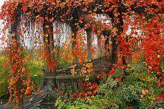 Autumn Vines, Wineberg, Germany