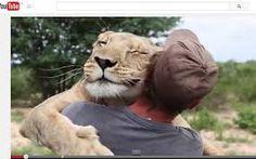 Sirga la leonessa abbraccia l'uomo che le salvò la vita.
