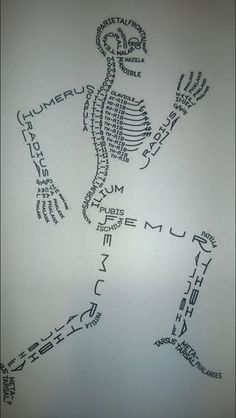 I wish this diagram had been in my anatomy book. Would have made learning all 206 bones easy AND fun!