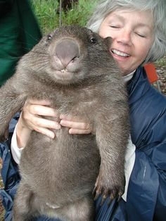 My life will not be complete until I have had a wombat. They're soooooo cute #obsessed!