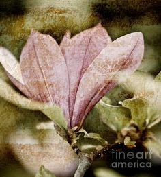 Magnolia and a photoshop