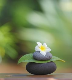 """""""The obstacle is the path."""" Why do all Zen quotes relate to my life right now? Gift Quotes, Prayer Quotes, Arte Floral, Dalai Lama, Yoga Meditation, Meditation Symbols, Simple Meditation, Meditation Garden, Meaningful Quotes"""