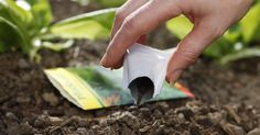 Die Aussaat ist die wichtigste Vermehrungsmethode für Gemüse und Blumen. Wenn Sie diese Hinweise befolgen, steht einer erfolgreichen Anzucht nichts im Wege.