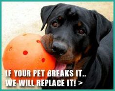 Indestructible Dog Toys | Durable Dog Toys | Large Breed Dog Snacks - Tap the pin for the most adorable pawtastic fur baby apparel! You'll love the dog clothes and cat clothes! <3