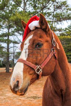 ab902d3f5 Quarter horse in Santa Claus hat close up outdoors Santa Claus Hat, Close  Up,