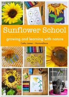 Sunflower activities for children. how to grow sunflowers, school gardening club activities, sunflower lesson plans Bee Crafts For Kids, Preschool Crafts, Projects For Kids, Art For Kids, Art Projects, Preschool Garden, Preschool Themes, Project Ideas, Spring Activities