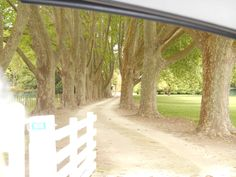 The drive to Fardon House , Clive. Hawkes Bay New Zealand.