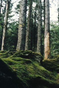 Gougane Barra Forest Park, Cork, Ireland - Bek C