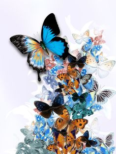 butterfly art images - Google Search