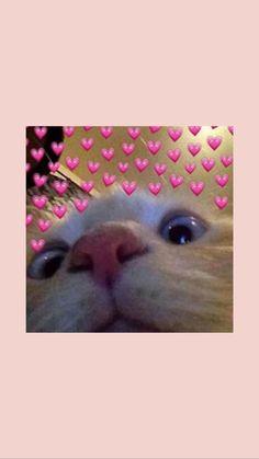 Source by videos wallpaper cat cat memes cat videos cat memes cat quotes cats cats pictures cats videos Tier Wallpaper, Cute Cat Wallpaper, Funny Iphone Wallpaper, Iphone Background Wallpaper, Cute Disney Wallpaper, Animal Wallpaper, Cute Cartoon Wallpapers, Wallpaper Wallpapers, Amazing Animals