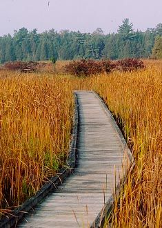 Presqu'ile boardwalk trail