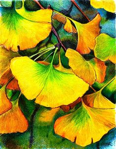 Ginko Drawing by Pamir Thompson - Ginko Fine Art Prints and Posters for Sale