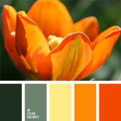 color inspiration.
