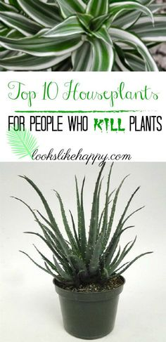 10 Plants- for plant killerz