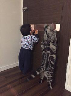 向こうを覗く猫と男の子。次の瞬間、もっとカワイイことに! 3枚 | BUZZmag
