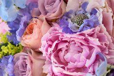 Nikki-Tibbles-Stand-RHS-Hampton-Court-Palace-Flower-Show-Flowerona