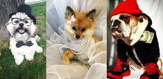 Let these real costumed canines inspire your pooch's disguise this year.