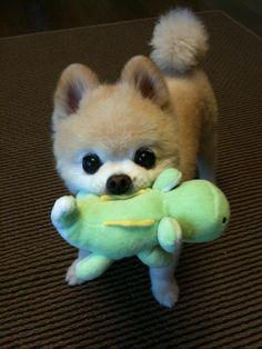 I need this dog!!